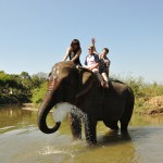 Riding elephants in the jungle